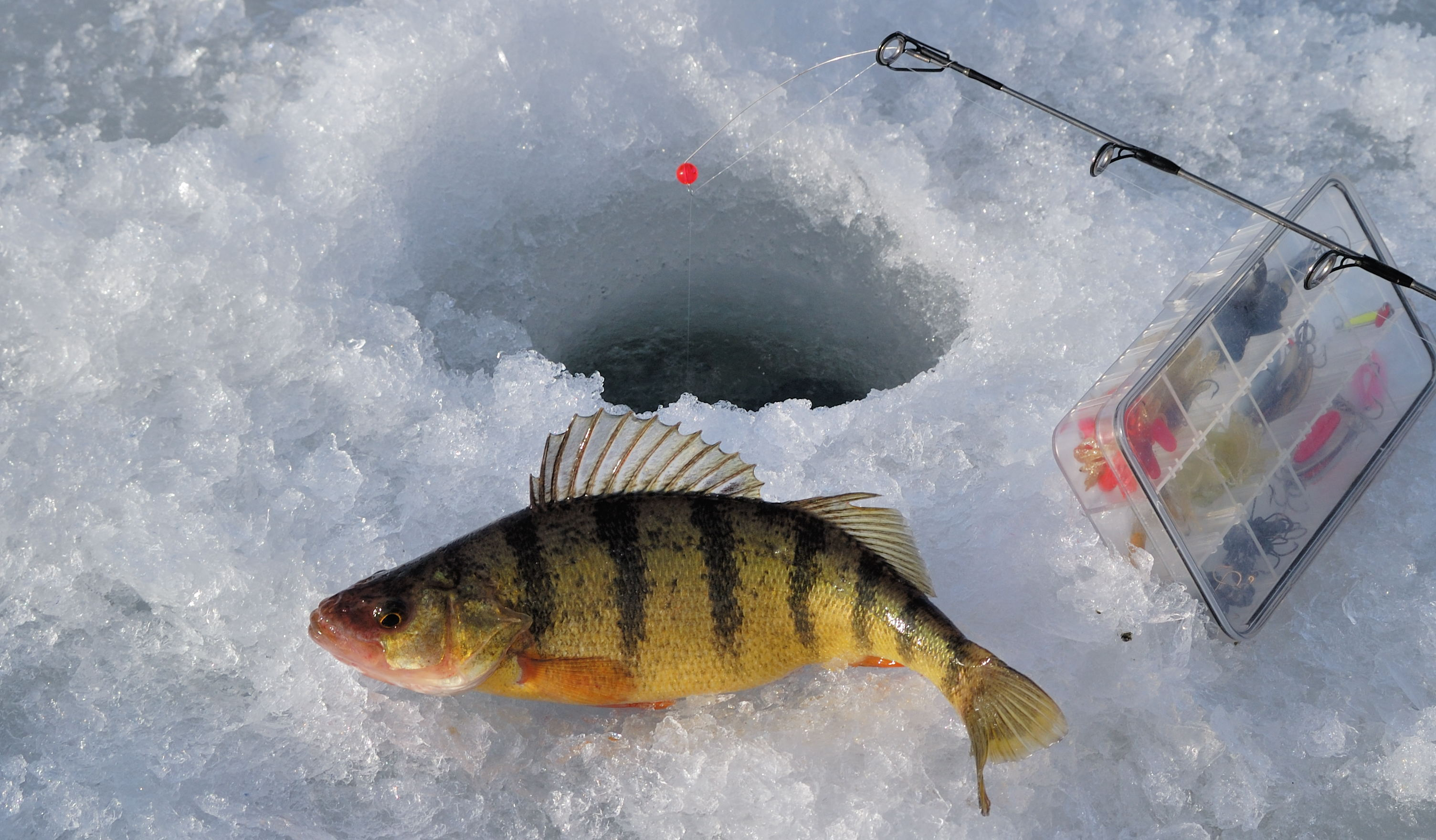 101 ice fishing guide top tips on how to go ice fishing for Go ice fish