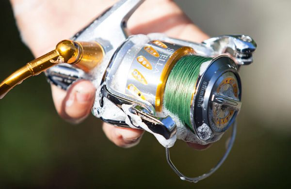 cleaning a fishing reel