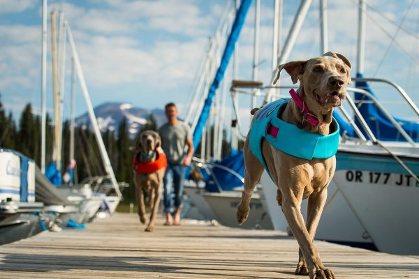 float jackets for dogs