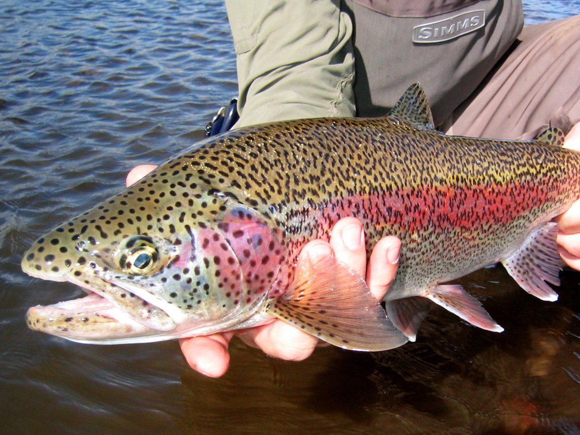 Fishing for Trout in the Shadows: Tips & Best Gear ...