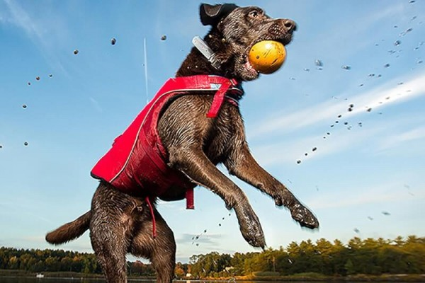 Best Life Jackets For Dogs Reviewed 2018 GearWeAre