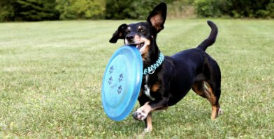 Best Dog Frisbee Reviewed 2018 GearWeAre
